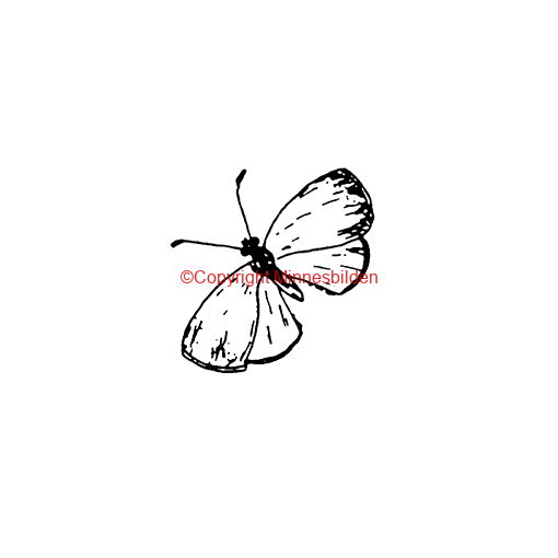Symbol 260