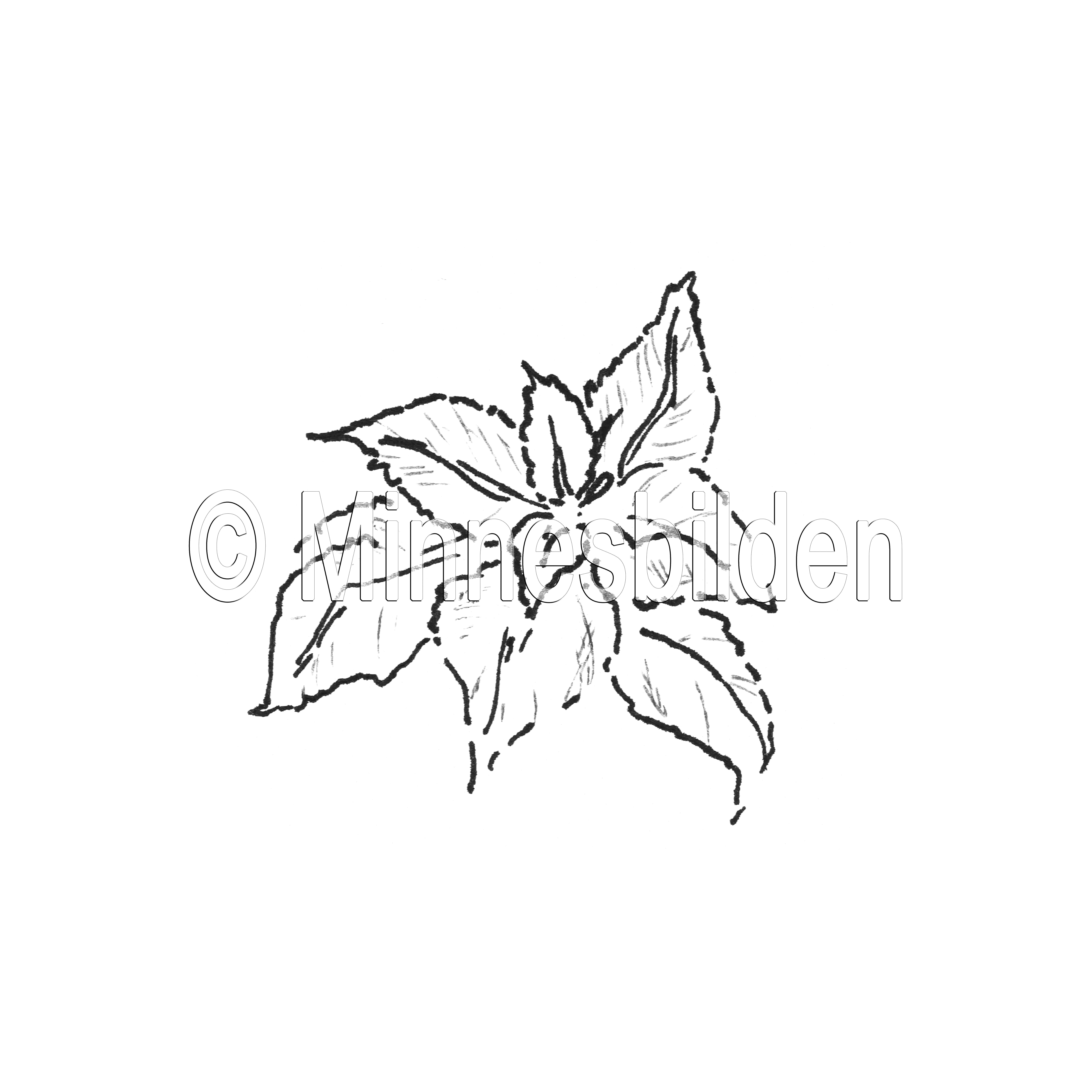 Symbol 267