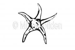 Symbol 285